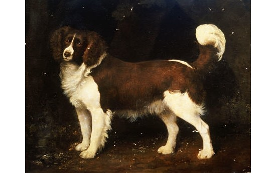 "GEORGE STUBBS ""Spaniel"" Dog PRINT new CANVAS choose SIZE, from 55cm upwards, NEW"