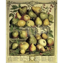 ROBERT FURBER Fruits of Spring pears apples print FOOD SIZE:24cm x 19cm