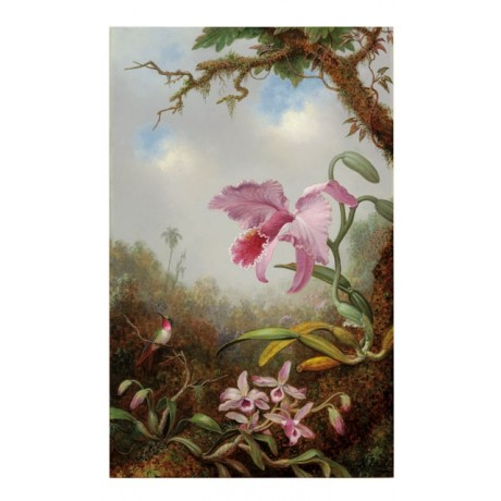 MARTIN JOHNSON HEADE Hummingbird and Two Types of Orchids NATURE lilac CANVAS!