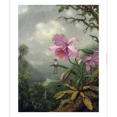 "MARTIN HEADE ""Hummingbird Perched On An Orchid Plant"" various SIZES available"