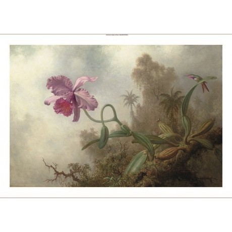 "MARTIN JOHNSON HEADE ""Orchid with an Amethyst Woodstar"" various SIZES, BRAND NEW"