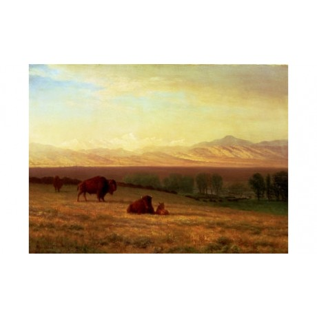 "ALBERT BIERSTADT ""Buffalo On Plains"" CANVAS EDITION various SIZES available, NEW"
