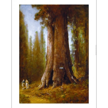 THOMAS HILL California Redwood Trees new CANVAS print! various SIZES, BRAND NEW