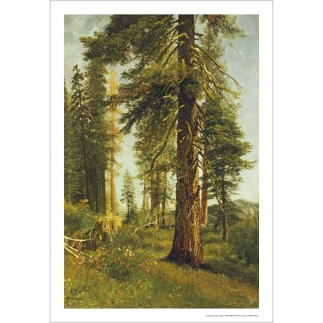 "ALBERT BIERSTADT ""California Redwoods"" CANVAS landscape various SIZES, BRAND NEW"