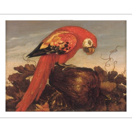 ABRAHAM BOSSCHAERT Parrot Sitting on Large Vegetable LIZARD CANVAS