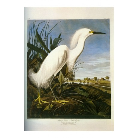 "DECORATIVE CANVAS PRINT ""Snowy Heron"" NEW choose SIZE, from 55cm to X LARGE, NEW"