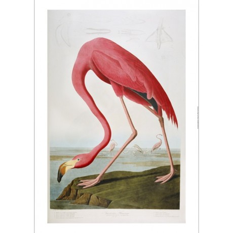 "DECORATIVE CANVAS PRINT ""American Flamingo"" NEW choose SIZE, from 55cm up, NEW"