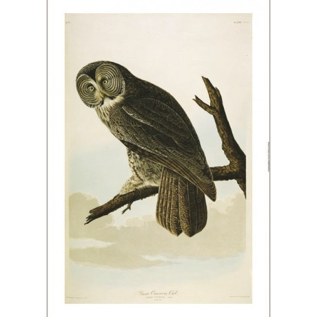 "DECORATIVE CANVAS PRINT ""Great Cinereous Owl I"" NEW various SIZES available, NEW"