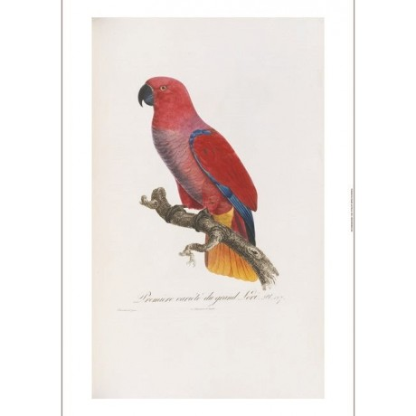 "DECORATIVE CANVAS PRINT ""Red Parrot"" NEW choose SIZE, from 55cm to X LARGE, NEW"