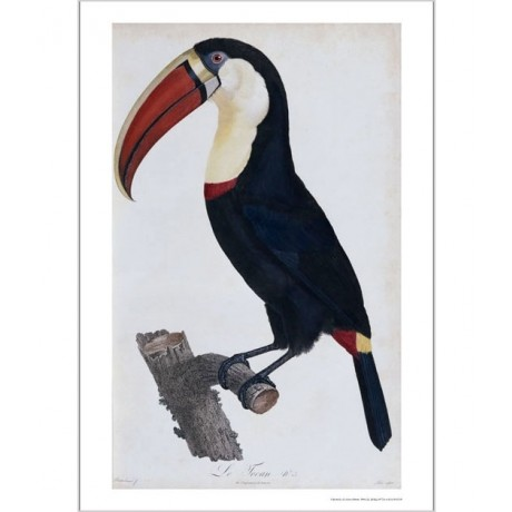 FRANCOIS LEVAILLANT Toucan NEW CANVAS PRINT! choose SIZE, from 55cm upwards, NEW