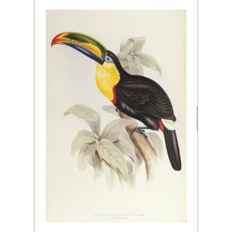 "DECORATIVE CANVAS PRINT ""Toucan"" NEW bird choose SIZE, from 55cm to X LARGE, NEW"
