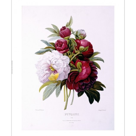 "PIERRE JOSEPH REDOUTE ""Peonies"" CANVAS ART ! CANVAS various SIZES available, NEW"