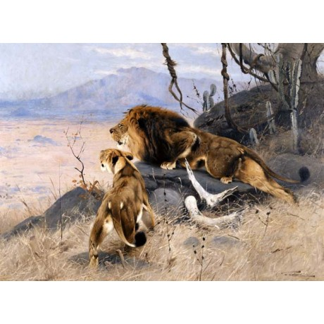 WILHELM KUHNERT Lion and Lioness alert PARTNERSHIP safari plains WILD two NEW!