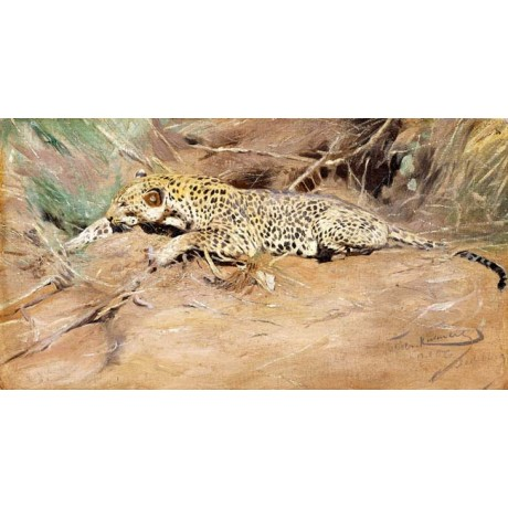 "WILHELM KUHNERT ""Ein Leopard"" IN THE WILD spotted lying relaxing CANVAS PRINT"