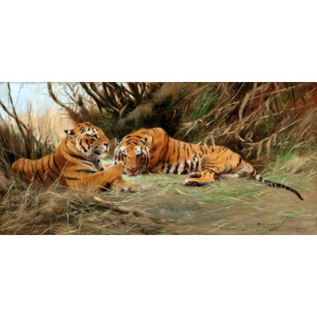 WILHELM KUHNERT Tigers at Dawn pair WILD animals relaxing stripes paws CANVAS!