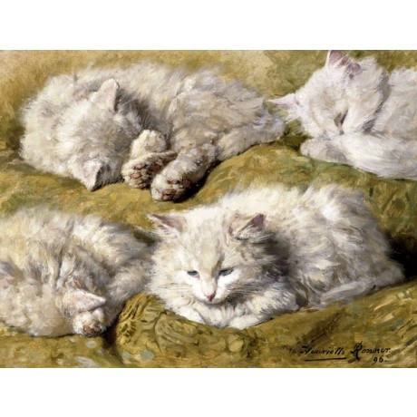 HENRIETTE RONNER-KNIP Studies of a Long-haired White Cat SWEET and fluffy NEW!