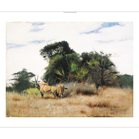 "WILHELM KUHNERT ""Gemsbok Ory"" animal print ON CANVAS various SIZES available"