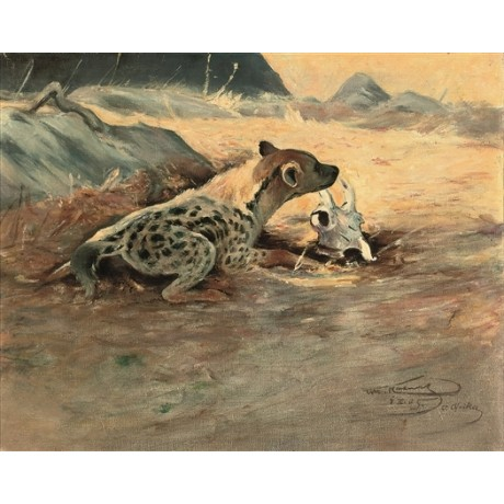 WILHLEM KUHNERT A Hyena on the African Plains SKULL scavenger NEW CANVAS giclee