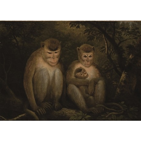 FRENCH SCHOOL Macaques MONKEYS primate family parents young treetop NEW CANVAS