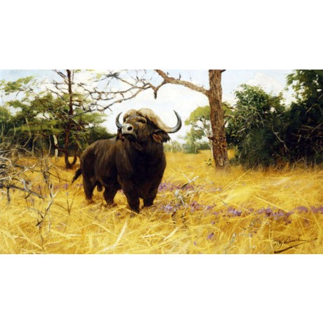 WILHELM KUHNERT Kaffir Buffalo in Prairie Grass ALERT animal horn CANVAS PRINT