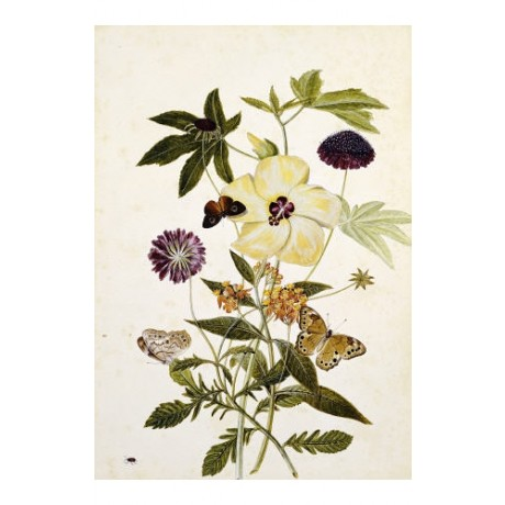 THOMAS ROBINS, JR. Hibiscus With Butterflies PRINT choose SIZE, from 55cm up