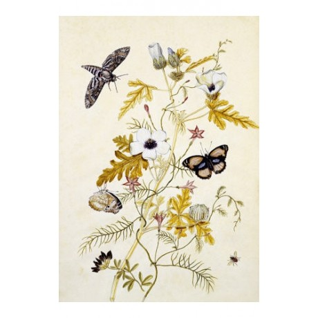 "THOMAS ROBINS, JR. ""Butterflies & Cupid Flower"" Print various SIZES, BRAND NEW"