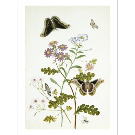 THOMAS ROBINS, JR. Butterflies And Chrysanthemum PRINT various SIZES, BRAND NEW