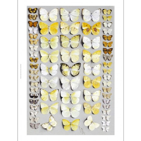 MARIAN ELLIS ROWAN Lepidoptera Butterflies ON CANVAS various SIZES available