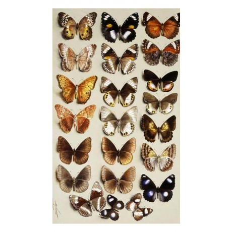 "EXTRAORDINARY CANVAS PRINT ""Twenty-two butterflies"" markings MARIAN ELLIS ROWAN"