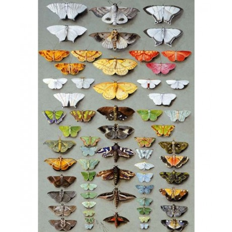 "INTRICATE NEW CANVAS PRINT!!! ""Sixty-three Moths"" PINK green MARIAN ELLIS ROWAN"
