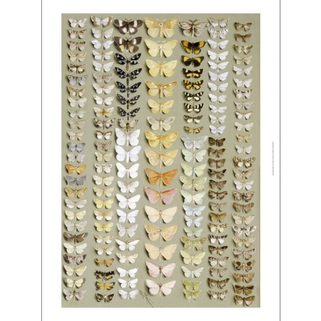MARIAN ELLIS ROWAN Moths ON CANVAS choose SIZE, from 55cm to X LARGE, giclee