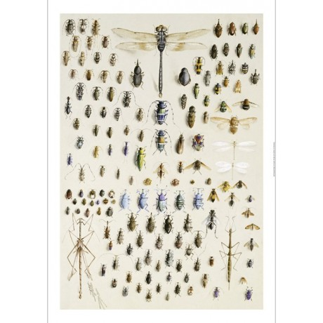 MARIAN ELLIS ROWAN One Hundred And Fifty Insects PRINT various SIZES, BRAND NEW