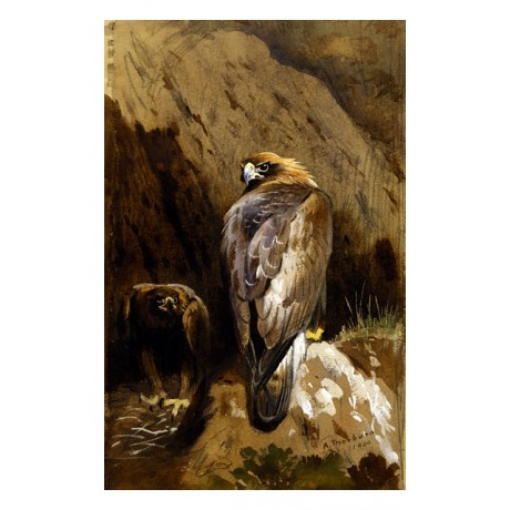 "CAPTIVATING CANVAS PRINT ""Golden Eagles at Their Eyrie"" bird ARCHIBALD THORBURN"