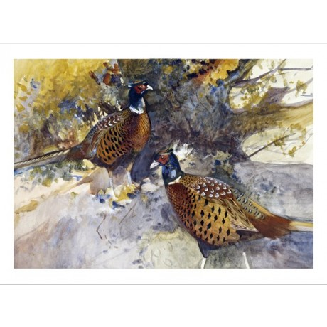 "FIRST-CLASS CANVAS PRINT ""Cock Pheasants under a Beech Tree"" FRANK SOUTHGATE"