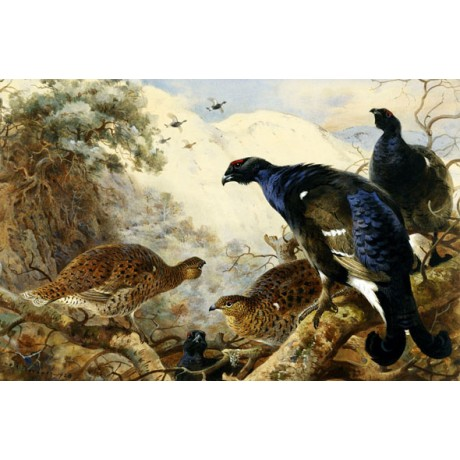 "OUTSTANDING NEW CANVAS PRINT of ""Blackgame"" BIRDS trapped ARCHIBALD THORBURN"