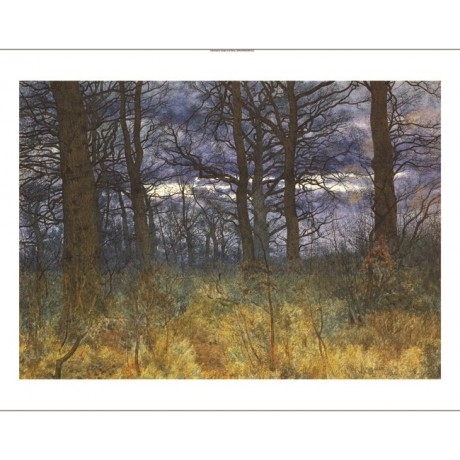 "WILLIAM FRASER GARDEN ""The Wood at Dusk"" new CANVAS! various SIZES available"