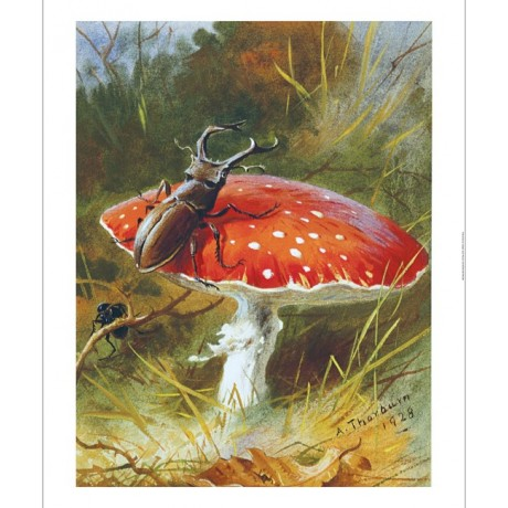 ARCHIBALD THORBURN Stag Beetle On Toadstool new CANVAS! various SIZES, BRAND NEW