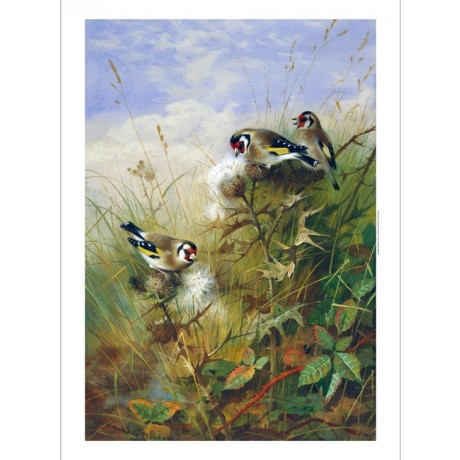 "ARCHIBALD THORBURN ""Goldfinches On Thistles"" BIRDSONG feathers nature CANVAS"