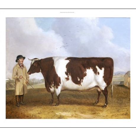 RICHARD WHITFORD Prize Friesian Bull PRINT NEW choose SIZE, from 55cm up, NEW