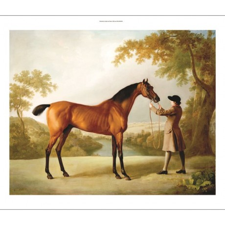 "GEORGE STUBBS ""Tristram Shandy"" Horse CANVAS ART ! choose SIZE, from 55cm up"