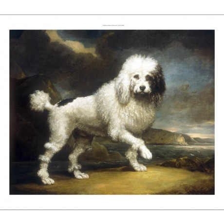 JAMES NORTHCOTE Standard Poodle In Coastal Landscape ROMANTIC sea CANVAS PRINT
