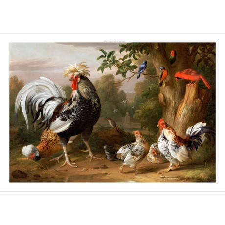 JACOB BOGDANY Poultry Bird PRINT New CANVAS choose SIZE, from 55cm upwards, NEW