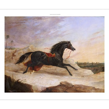 JOHN FREDERICK HERRING Loose Arab Horse PRINT new choose SIZE, from 55cm up, NEW