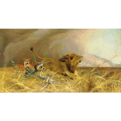 "WILHELM KUHNERT ""Lions Fleeing a Veldt Fire"" savanna various SIZES available"