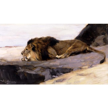 "WILHELM KUHNERT ""A Resting Lion"" WILD animal lying on a rock mane CANVAS PRINT"