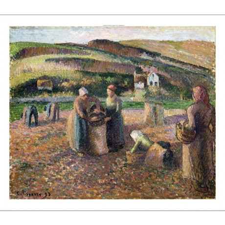 "CAMILLE PISSARRO ""Picking Potatoes"" FARM canvas print! various SIZES, BRAND NEW"