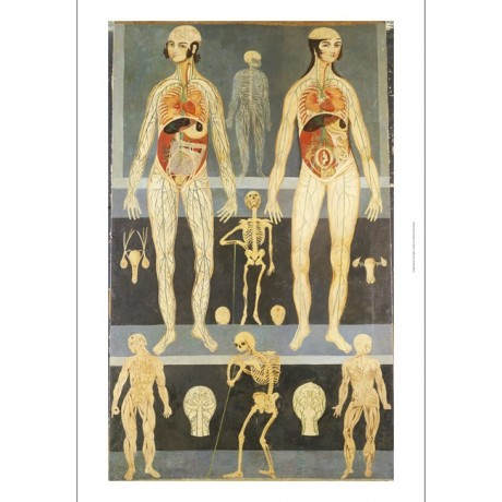 "DECORATIVE PRINT ""Persia, Qajar Anatomical"" medical various SIZES available, NEW"
