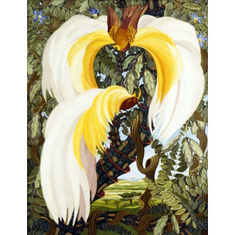 ZIMMER-SCHRODER Birds of Paradise IMPRESSIVE plumage yellow feathers NEW PRINT