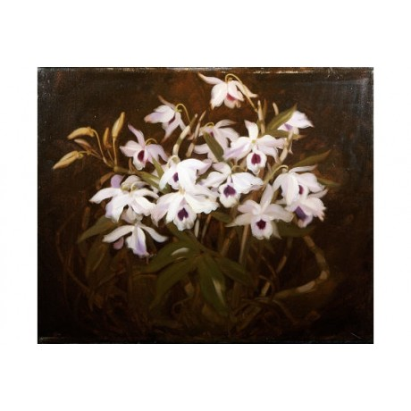 "JAMES STUART PARK ""Dinrobium Orchids"" Print various SIZES available"