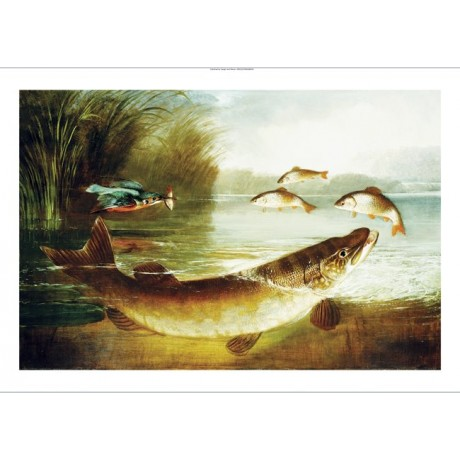 HENRY LEONIDAS ROLFE Kingfisher And A Pike fish PRINT various SIZES, BRAND NEW